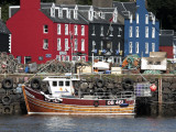 Scotland, Isle of Mull; Fishing Boat and Colourful Waterfront Houses at Tobermory Harbour Photographic Print by Will Gray