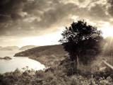 Caribbean, Us Virgin Islands, St; John, Virgin Islands National Park, Trunk Bay Photographic Print by Michele Falzone