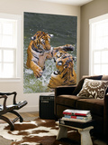 Tigers Play Fighting in Water, Indochinese Tiger or Corbett's Tiger (Panthera Tigris Corbetti) Wall Mural by Peter Adams