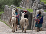 Peru, Native Indian Women Lead their Llamas Past the Ruins of Saqsaywaman Fotografie-Druck von Nigel Pavitt