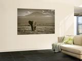 Elephant, Mt. Kilimanjaro, Masai Mara National Park, Kenya Wandgemälde von Peter Adams