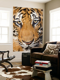 Portrait, Indochinese Tiger or Corbett's Tiger (Panthera Tigris Corbetti), Thailand Wall Mural by Peter Adams