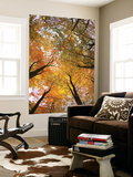 Woods in Autumn Time, Surrey, England, Uk Wall Mural by Jon Arnold