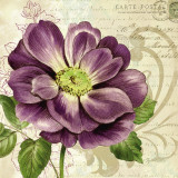 Study in Purple I Prints by Pamela Gladding