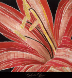 Red Amaryllis Poster by Roberta Ahrens