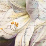 Lily Script I Prints by Patricia Quintero-Pinto