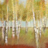 Birch Trees II Posters