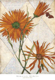 Orange Daisies Art by Karen Sikie