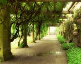 Opulent Garden I Prints by C.J. Stanz