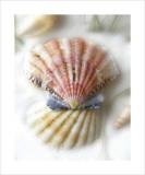 Sand and Shell II Kunst af Donna Geissler