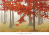 Autumn Mist II Poster by Donna Geissler