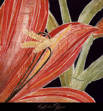 Red Amaryllis with Stem Prints by Roberta Ahrens