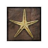 Starfish Giclee Print by John Golden