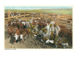 Cowboys Branding Calves in Corral Poster