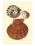 Sea Shells Posters