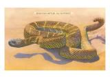 Seven-Foot Rattler, Ole Southwest Giclee-tryk i høj kvalitet