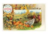 Male and Female Turkeys, Pumpkins Print