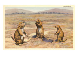Three Prairie Dogs Prints