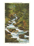 Roaring Fork Creek, Great Smoky Mountains Posters