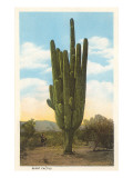 World's Largest Saguaro Cactus Poster