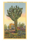 Watermelon Tree, Freak Saguaro Cactus Poster
