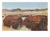 Petrified Wood in Desert Kunstdruck