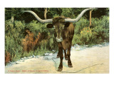 Texas Longhorn Prints