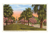 Tropical Boulevard, Galveston, Texas Poster