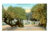 Salt Cedar Trees, Corpus Christi, Texas Poster