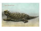 Texas Horned Toad Posters