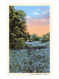Field of Bluebonnets, Texas Poster