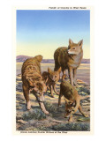 Coyote Family Posters