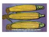 Masons Golden Midget Corn Posters