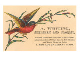 Victorian Multi-Colored Bird Prints