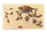 Horny Toad Family Poster