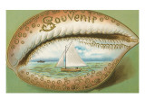 Souvenir Cowrie Shell with Sailboat Posters