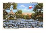 State Capitol, Austin, Texas, Blue Bonnets Prints