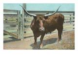Manzo di razza Texas Long Horn Stampe
