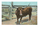 Texas Long Horn Steer Prints
