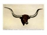 Texas Longhorn Steer Trophy Head Prints