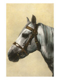 Horse's Head with Bridle Poster