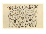Collection of Unmounted African Game Horns Poster