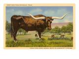 Longhorn Steer, Rockdale, Texas Prints