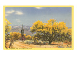 Palo Verde Trees and Saguaro in Desert Posters