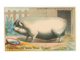 Bloated Pig Posters