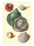 Seashells Posters