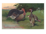 Three Wild Turkeys in Woods Print