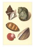 Seashells Prints
