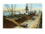 Loading Cotton on Ship, Houston, Texas Prints