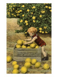 Child with Crate of Grapefruit Poster